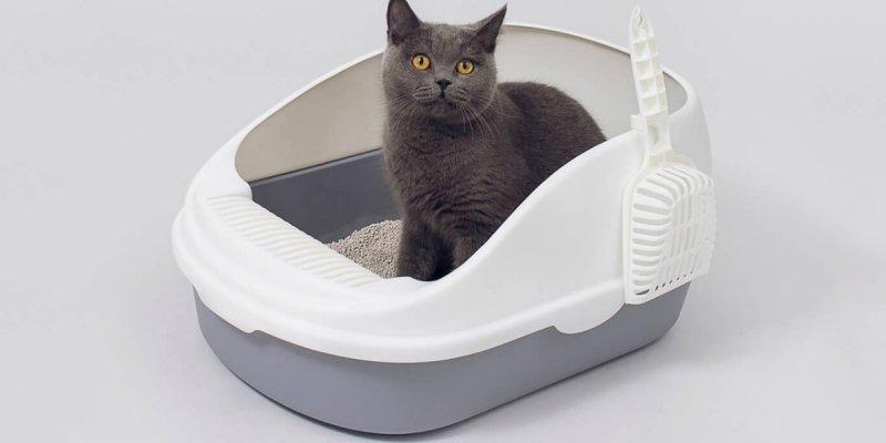 5 лучших кошачьих туалетов с AliExpress