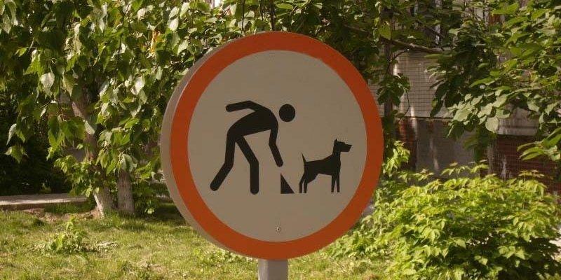 5 необходимых вещей для выгула собак из Aliexpress