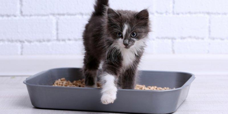 5 дешевых лотков для кошек из AliExpress