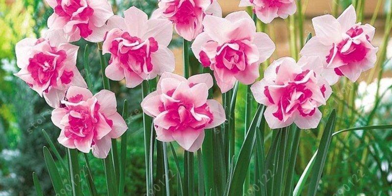 10 необычных растений в семенах для огорода из AliExpress
