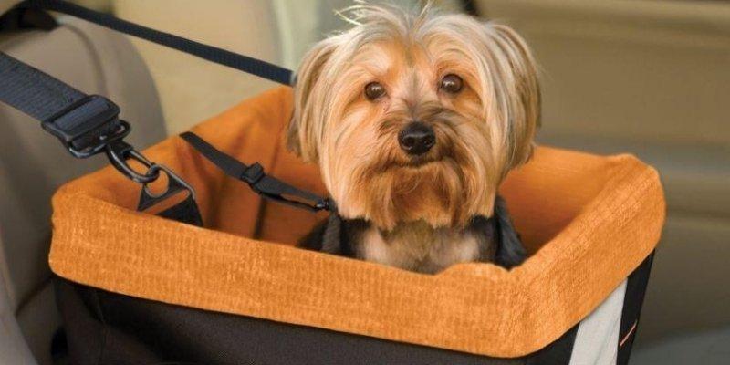 ТОП-5 вещей для перевозки собак в авто Aliexpress