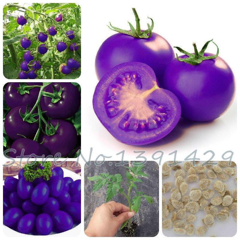 Семена фиолетовых помидоров