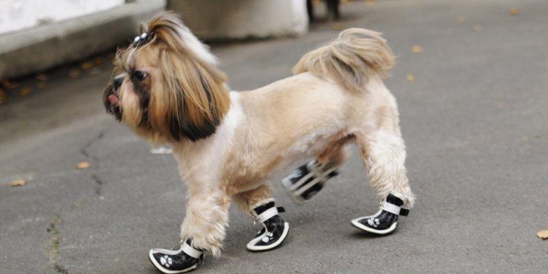 ТОП-5 модных ботиночек для собак из Aliexpress