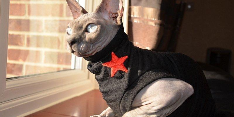 5 теплых одежек для голых кошек из Aliexpress