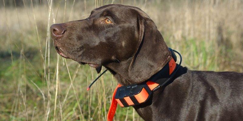 5 безопасных ошейников для дрессировки собак из Aliexpress