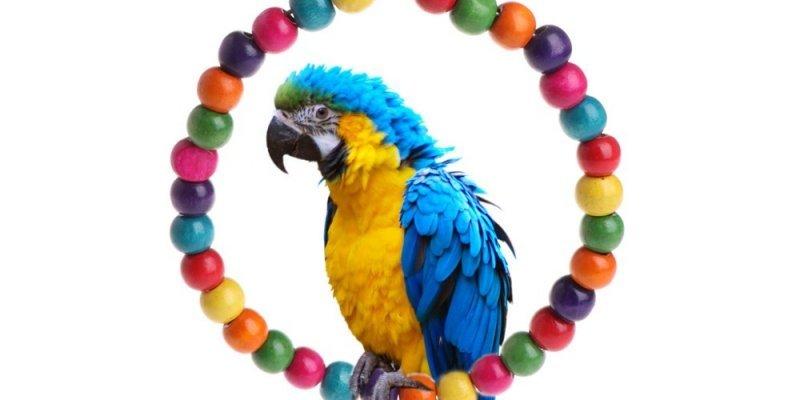 5 необычных товаров для птиц из Aliexpress