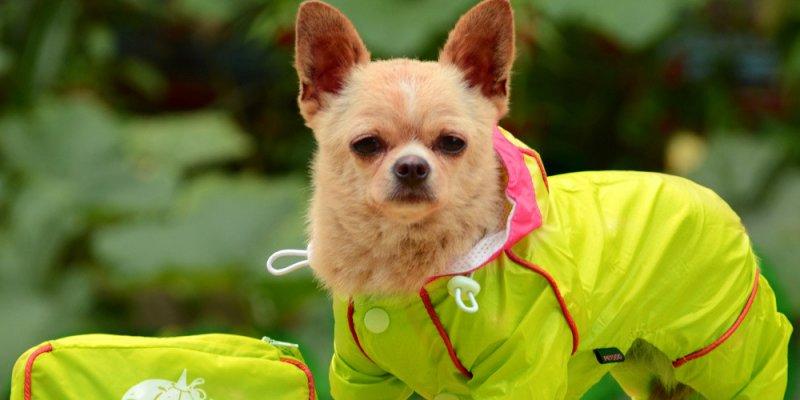 ТОП-5 недорогих одежек для собак из AliExpress