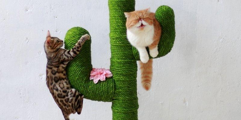 5 самых лучших когтеточек для кошек из AliExpress