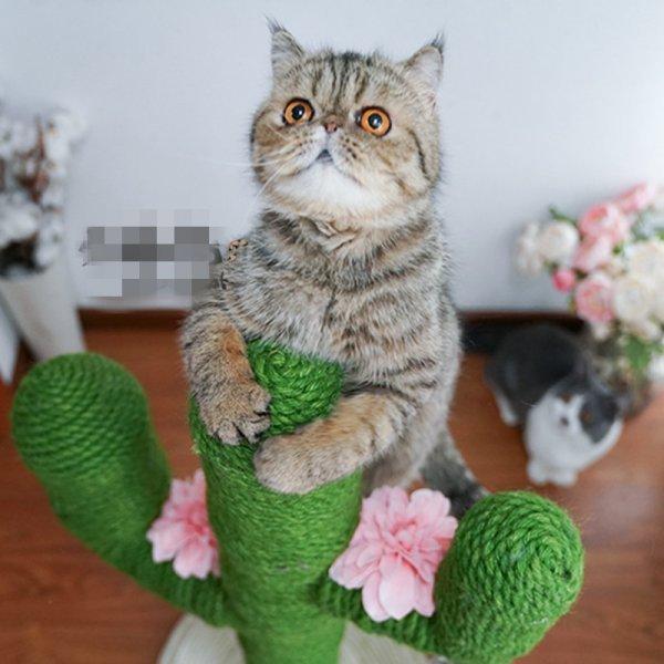 Оригинальная когтеточка Кактус (13 цветов, 2 размера)