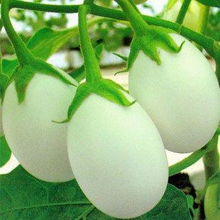 Семена белых помидоров (100 шт)